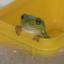 froggie_
